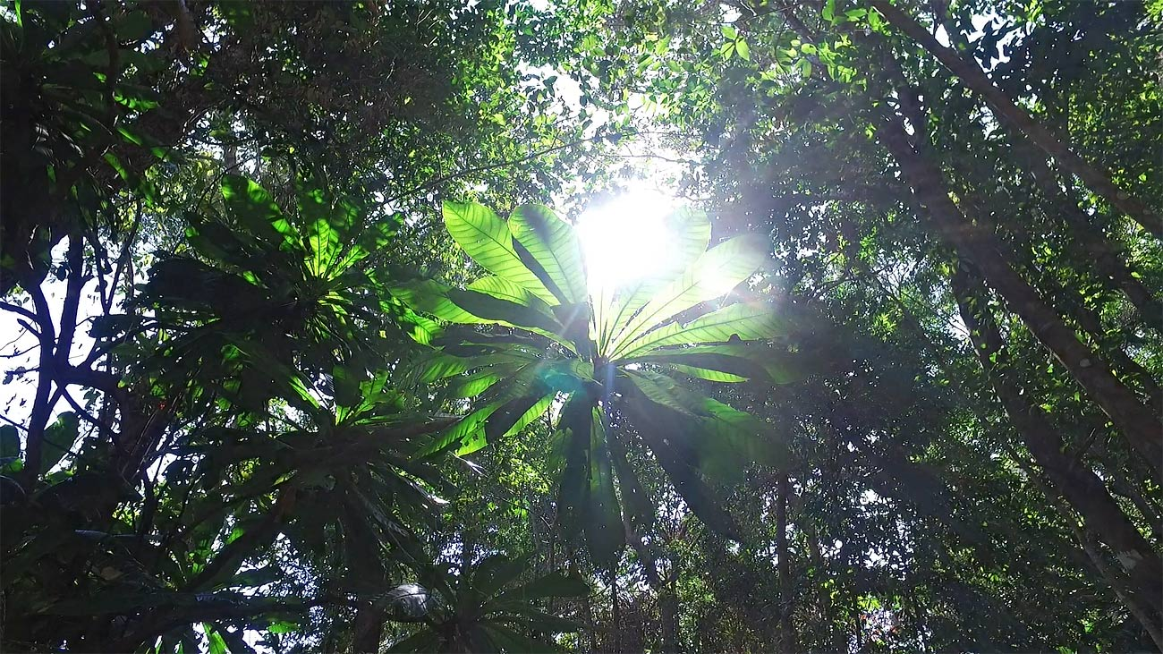 stock footage video of sun flair in Jungle rainforest, Asia